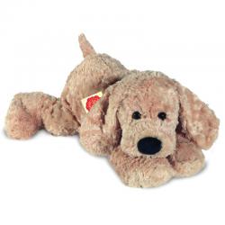 Teddy Cane Biondo da 1 anno